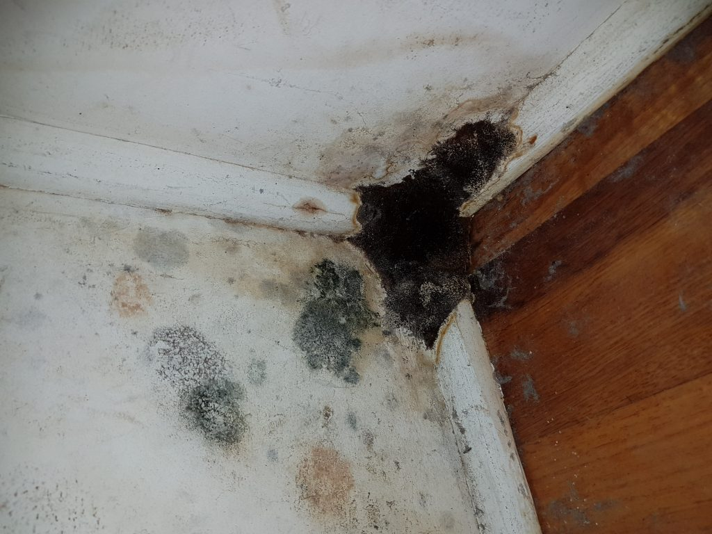 Mould on Wall Corner